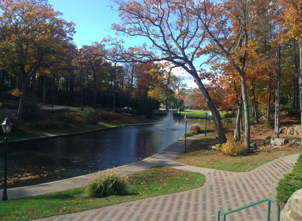 pond pic a